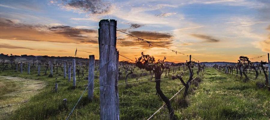 mudgee vineyards