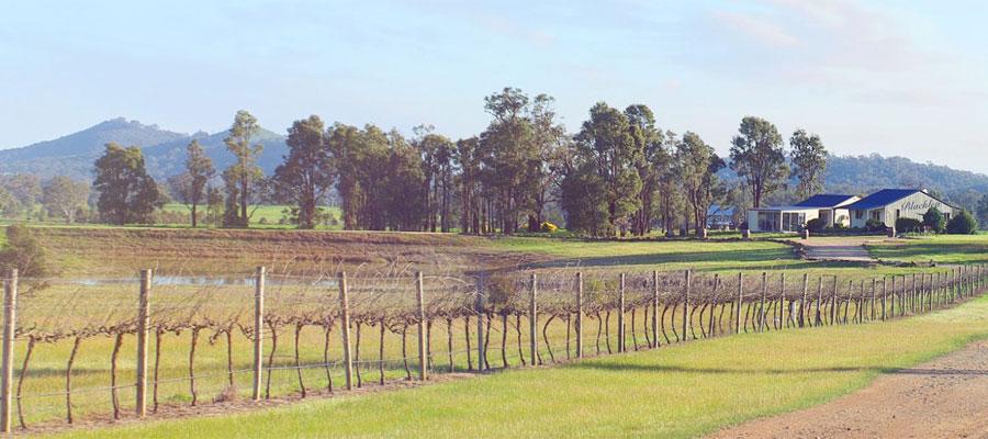 mudgee wineries